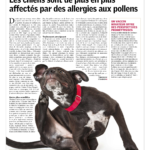 Dogs have more and more affected by pollen allergy